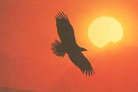Flügelschlag der Seele