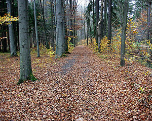 Wald ohne Duft